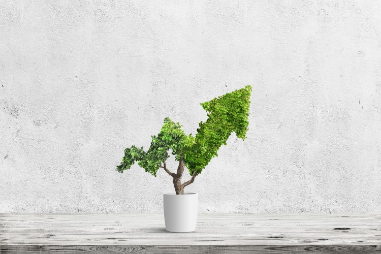 Potted green plant grows up in arrow shape over blue background. Concept business image